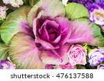Ornamental Cabbage  Colorful...