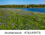 Beautiful Texas Bluebonnet ...