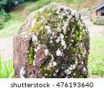 Moss Growing On Rocks .
