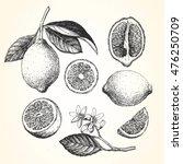 hand drawn illustration of... | Shutterstock .eps vector #476250709