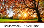 beautiful oak tree on a lawn... | Shutterstock . vector #476416054