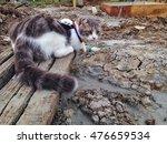Cat Sit On Splat