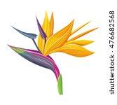 Bird Of Paradise Flower...