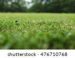 green grass close up   Shutterstock . vector #476710768