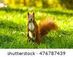 Little Red Eurasian Squirrel I...