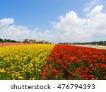 Annual Spring Flower Fields At...