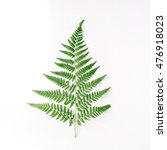 Fern Branch Isolated On White...
