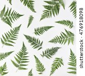 Fern Branches Pattern Isolated...