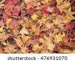 Small photo of Fallen leaves of autumn tinted American sweet gum were raked up together, central Japan.
