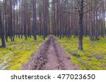Small photo of Firebreak in a pine forest.