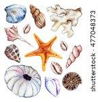 watercolor sea ocean seashell... | Shutterstock . vector #477048373