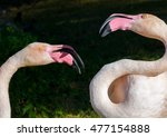 Small photo of Two flamingos squabble in the bright sunlight. Their bright yellow eyes look a bit wild.