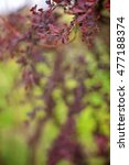Small photo of Branch of a spring tree with claret flowers and leaves close up