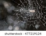 spider on the web | Shutterstock . vector #477219124