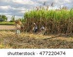 tay ninh  vietnam   nov 25 ... | Shutterstock . vector #477220474