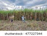 tay ninh  vietnam   nov 25 ... | Shutterstock . vector #477227344