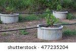 lime plant | Shutterstock . vector #477235204