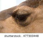 Macro Eye Of A Camel