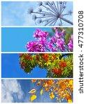 Plants Of Four Seasons Against...