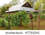 Small photo of historic plantation and farm buildings