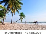 Coconut Palm And Horse On The...