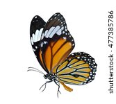 Stock photo common tiger danaus genutia the beautiful flying orange butterfly with fine sweeping wings in 477385786