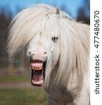Little Funny Shetland Pony...