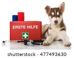 Stock photo dog first aid 477493630