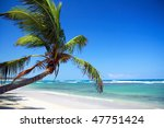palm on caribbean beach | Shutterstock . vector #47751424