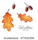 hand drawn watercolor set.... | Shutterstock . vector #477652390