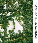 the green texture from the... | Shutterstock . vector #477910954