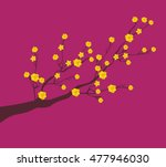 yellow apricot flower ... | Shutterstock .eps vector #477946030