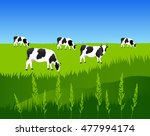 Vector Illustration. White Cow...