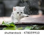 Cute Kitten Shakes The Water...