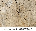 tree rings close up | Shutterstock . vector #478077613