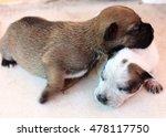 little dog sleeping in the...   Shutterstock . vector #478117750