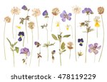 Stock photo dry pressed wild flowers isolated on white background 478119229
