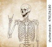 human skeleton posing over old... | Shutterstock .eps vector #478156180