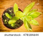 beautiful little plant ... | Shutterstock . vector #478184644