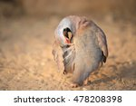 Small photo of Chukar Partridge (Alectoris chukar)