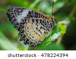 Butterfly On Green Leaves.clos...