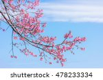 pink blossoms on the branch... | Shutterstock . vector #478233334