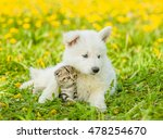 Stock photo puppy hugging a kitten on a dandelion field 478254670