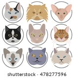 cat breeds icon set flat style. ... | Shutterstock .eps vector #478277596