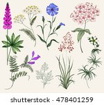 Collection Of Herbs And Flower...