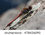Closeup Of Red Dragonfly...