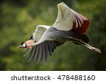 isolated grey crowned crane ... | Shutterstock . vector #478488160