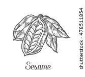 Sesame Seed  Nuts Plant ...