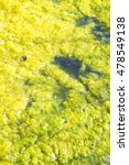 Small photo of Stagnant water background with algae emerging on surface