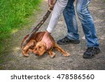 Small photo of Man holds a stick in hand and he wants to hit the dog - dog abuse